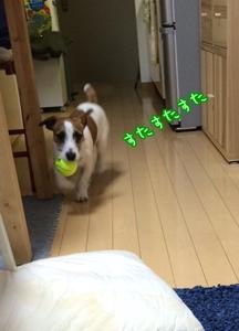 ボール遊び→夜散歩④