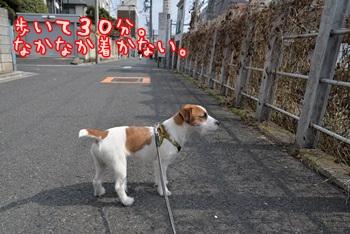 ドックラン(3/15)①