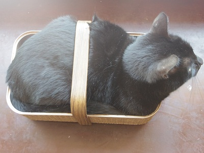 猫 in basket