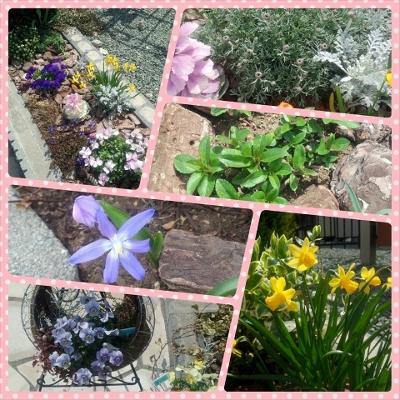 職場の花壇(3月)
