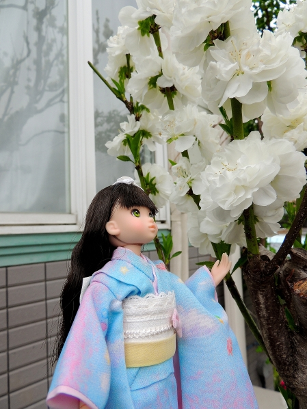 Ruru 姫 と 桜