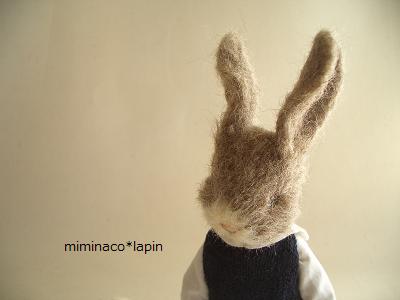 うさ 茶 羊毛