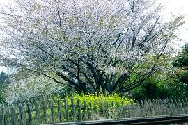 2015-04-10-21s.jpg