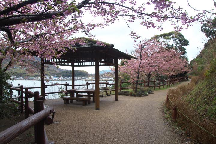 20150301城山歴史公園河津桜01