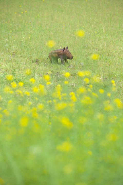 20150418府谷の芝桜03