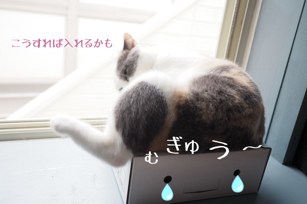20150705232353873.png
