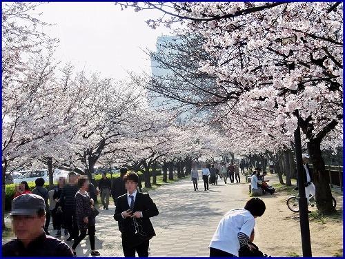 20150331桜 (2)