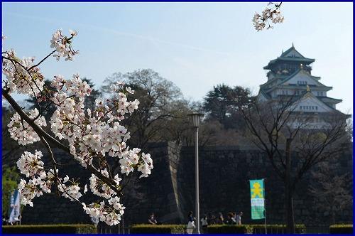 20150331桜 (5)