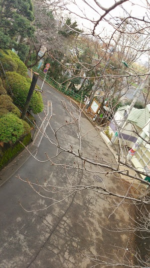 yagiri2.jpg