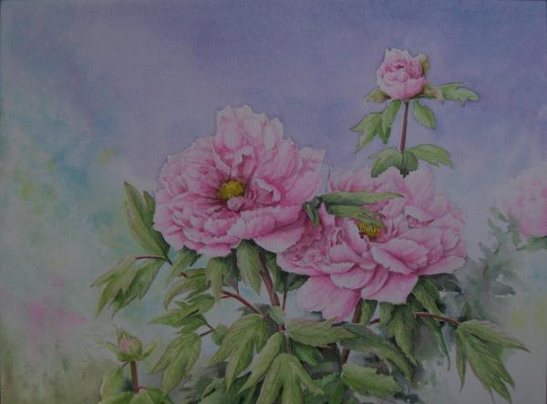 春牡丹 1505