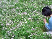 れんげのお花