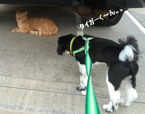 IMG_4974moji.jpg