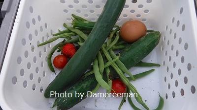 2015.6.28菜園8