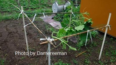 2015.7.4菜園