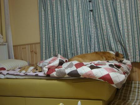 ベッドの上で