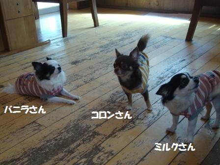 カフェで三姉妹