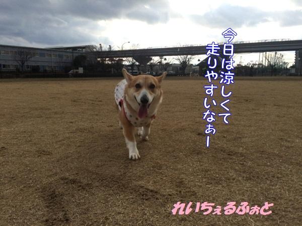 DPP_7339.jpg