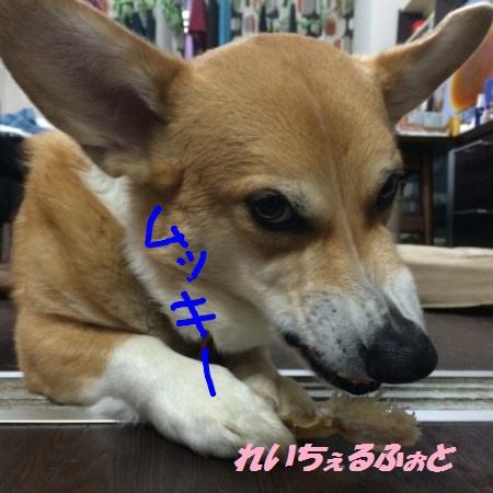 DPP_7342.jpg