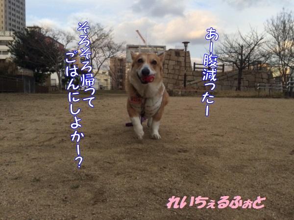 DPP_7349.jpg