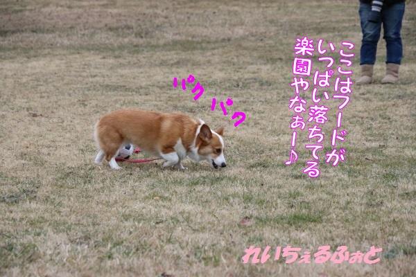 DPP_7368.jpg