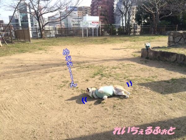 DPP_7719.jpg