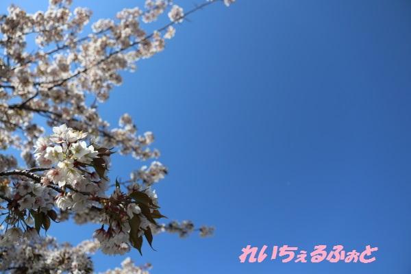 DPP_8083.jpg