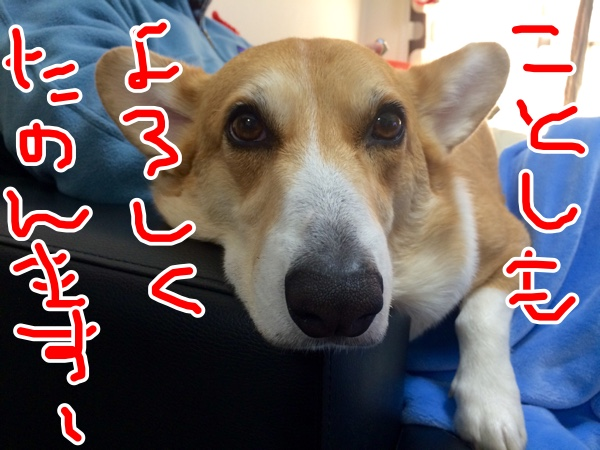 fc2blog_2015010113213750c.jpg