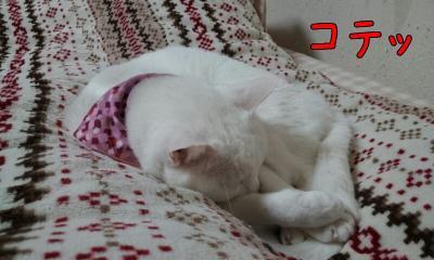 寝るぽ子2