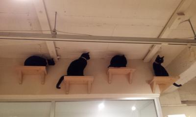 黒猫CM2