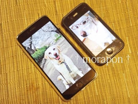 150108 iPhone 6 Plus