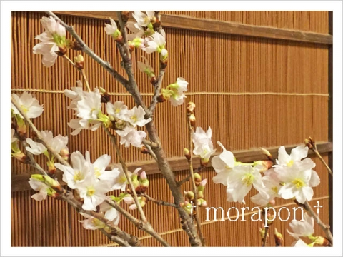 151010 啓翁桜-1