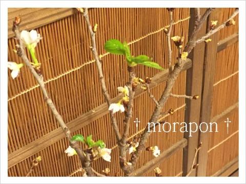150120 葉桜-1