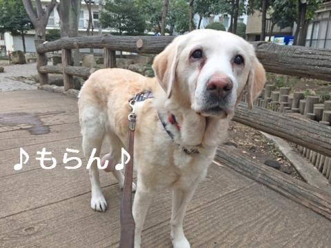 150127 曇天さんぽ-1
