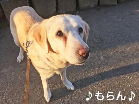 150304 ぽかぽか散歩-2