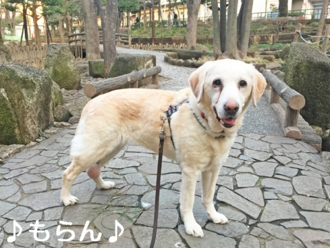 150304 ぽかぽか散歩-3