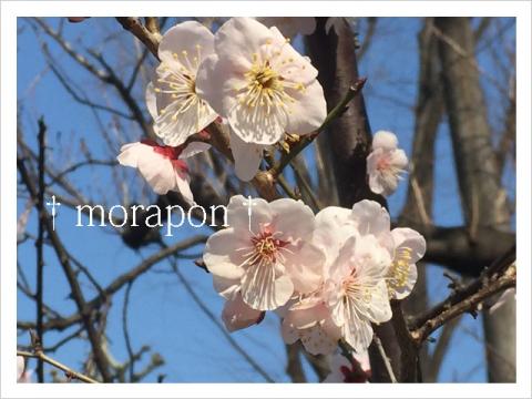 150313 梅は咲いたか 桜は……-3