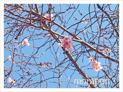 150313 梅は咲いたか 桜は……-4