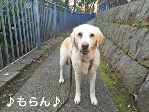 150327 ぽかぽか陽気の昼散歩-7
