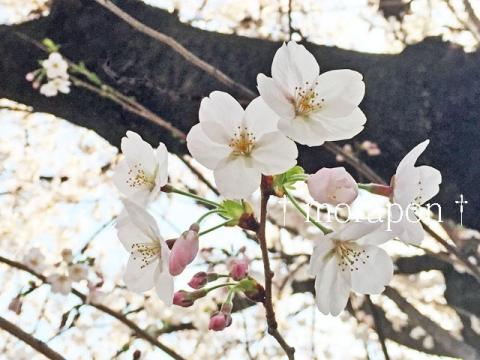 150330 お花見散歩-3