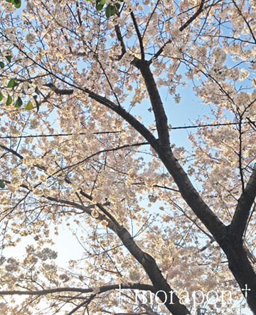 150330 お花見散歩-4