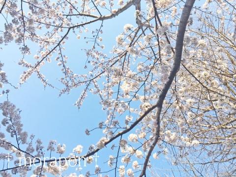 150330 お花見散歩-6