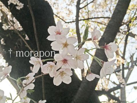 150402 お花見日和-5