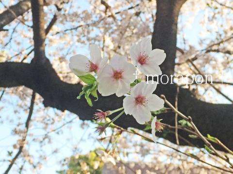 150402 お花見日和-6