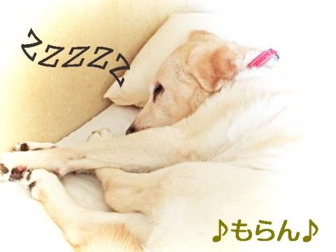 150417 狂犬病予防接種-1