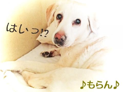 150417 狂犬病予防接種-2