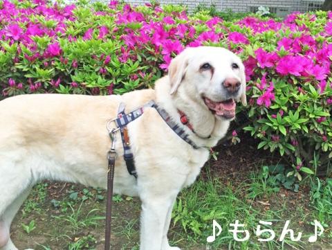 150424 のんびり散歩-1