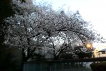 P4020118_01.jpg