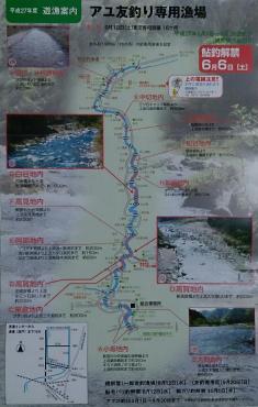 板取川上流2015鮎遊漁案内(中)