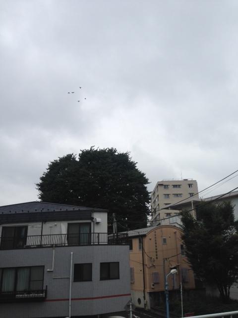 十月の夕方 鳥とムクノキ(2015-10-21)