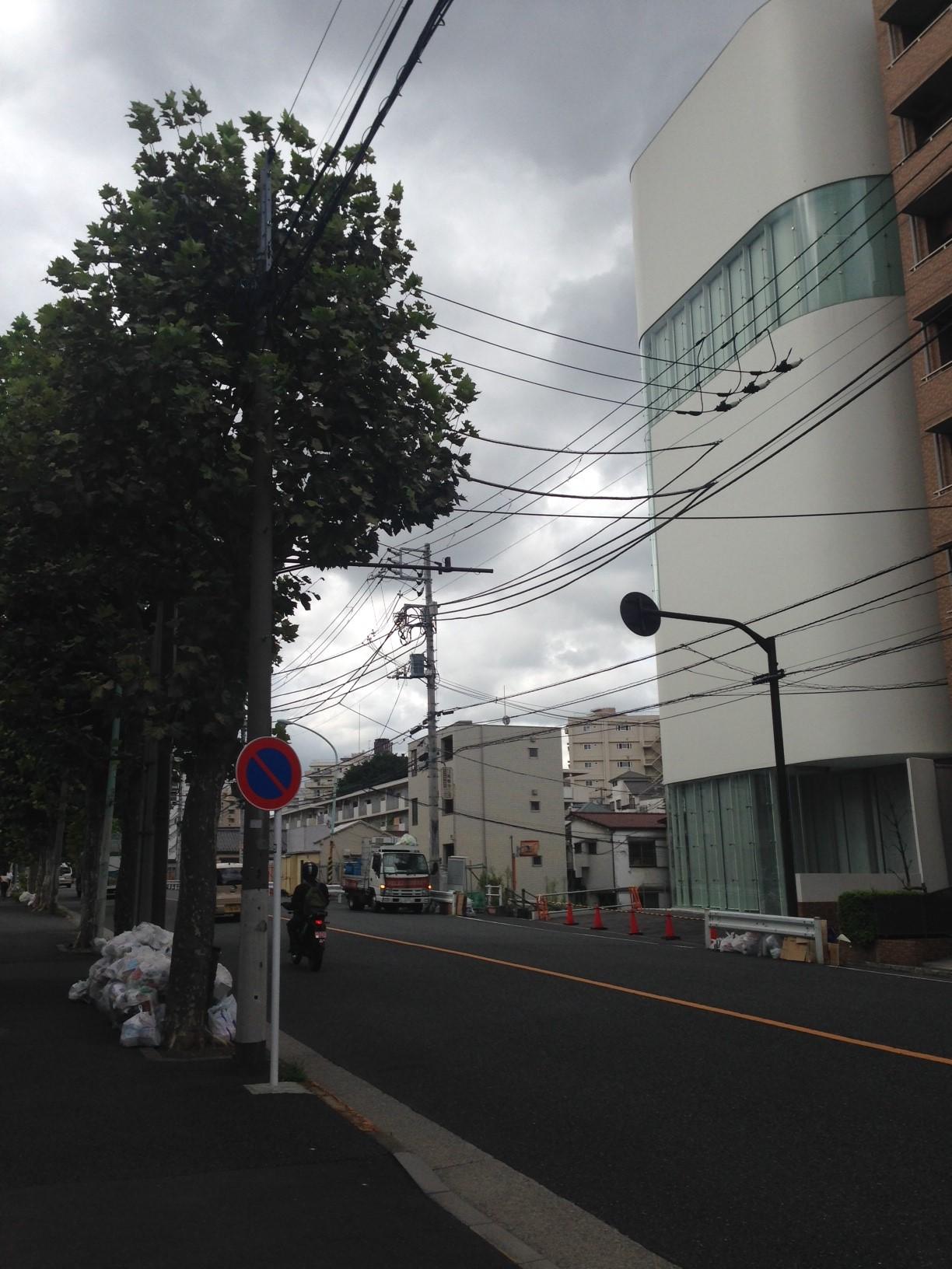 草間弥生美術館とムクノキ